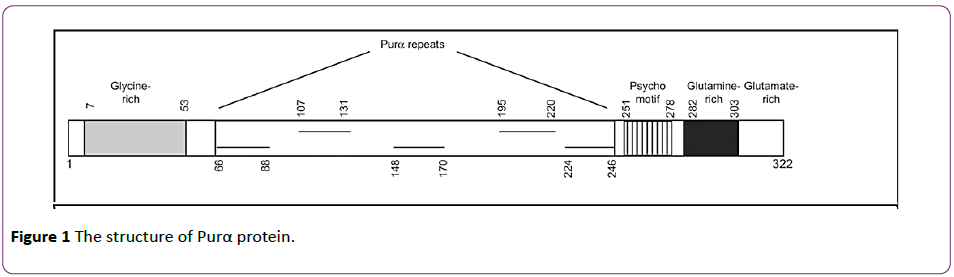 jneuro-structure-Purα-protein